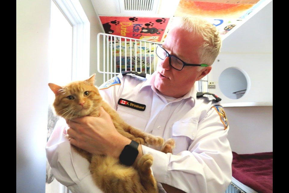 Kevin Strooband, executive director of the Lincoln County Humane society says the clinics work spaying and neutering animals has resulted in the clinic being able to help more strays, like Mr. Orange, a friendly tabby currently up for adoption. (Photo: Ludvig Drevfjall/Thorold News)