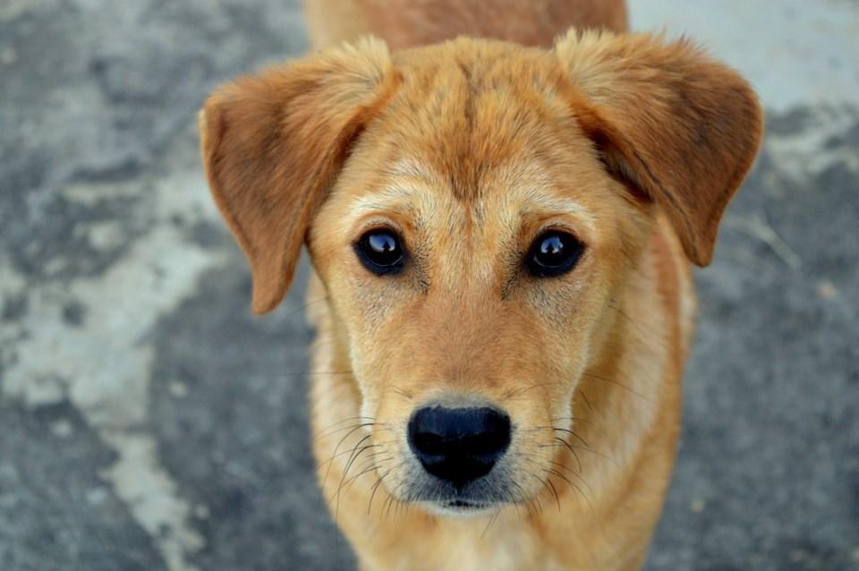 dog-brock-cruelty