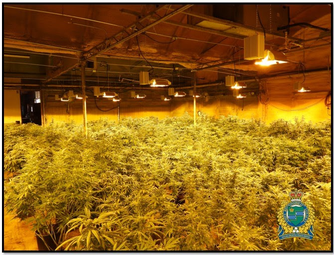 Police provided photo shows illegal cannabis grow operation raided in St. Catharines