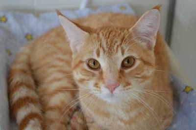 Oliver - Timmins adopt me