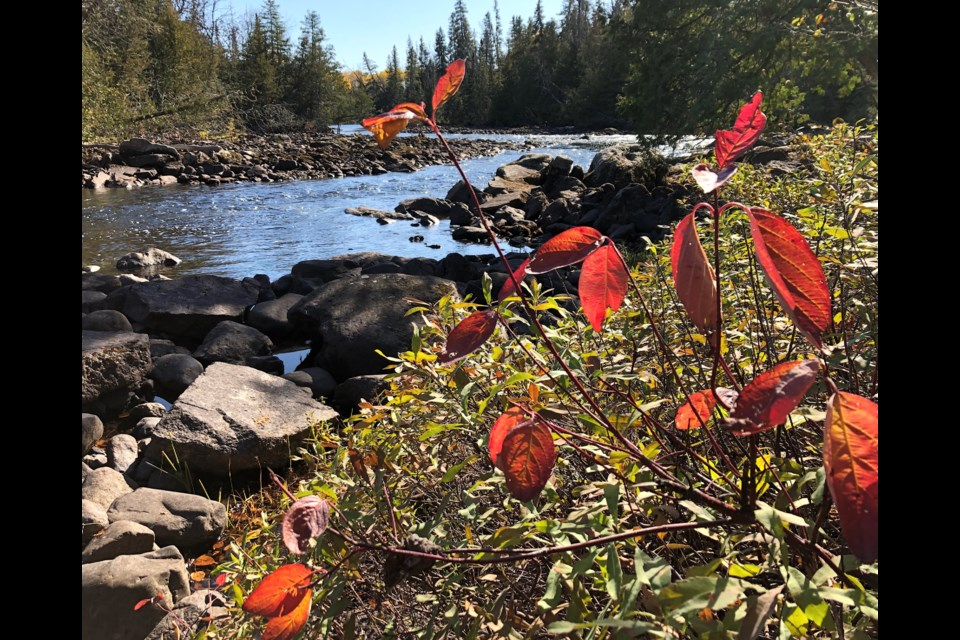 A splash of red adds to the view at the roadside picnic area west of Timmins on Hwy. 101 at Opishing Creek. Just drive about a half hour west of the city for the perfect picnic spot. Wayne Snider For TimminsToday