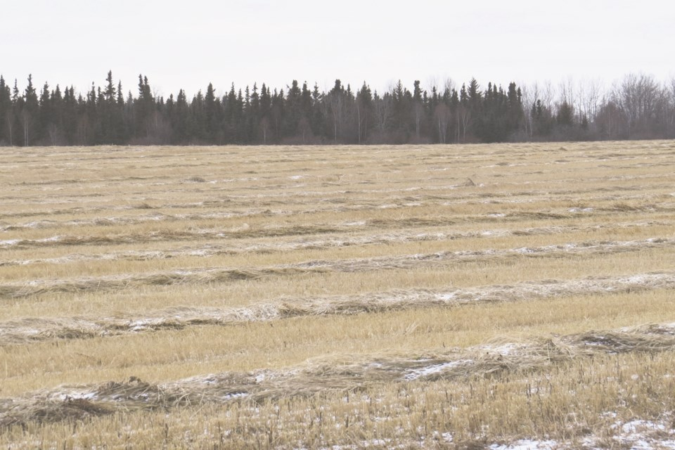 20191126-Athabasca County Crops-BT-01