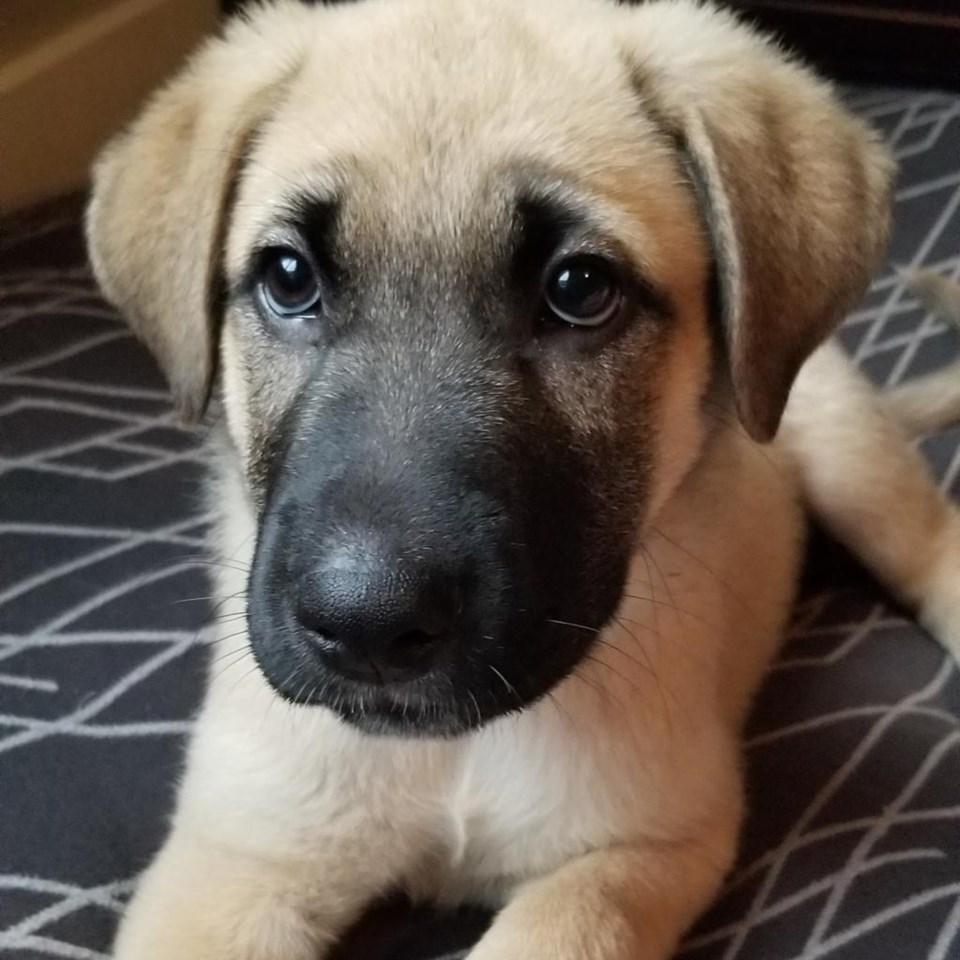 Barney dog