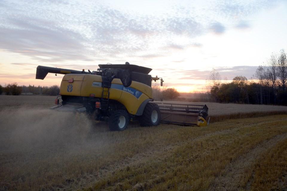 Harvest DSC_7382