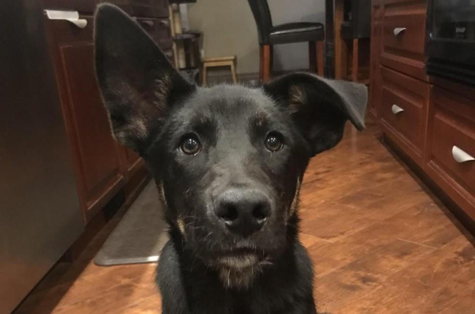WES - coda dog
