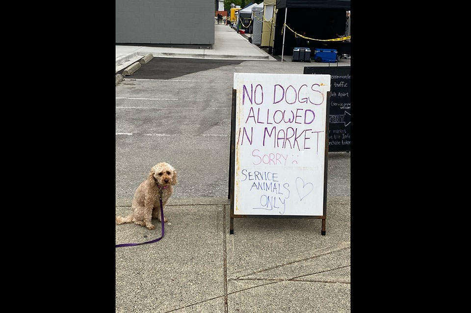 No dogs allowed at Coquitlam Farmers Market - letter to the editor