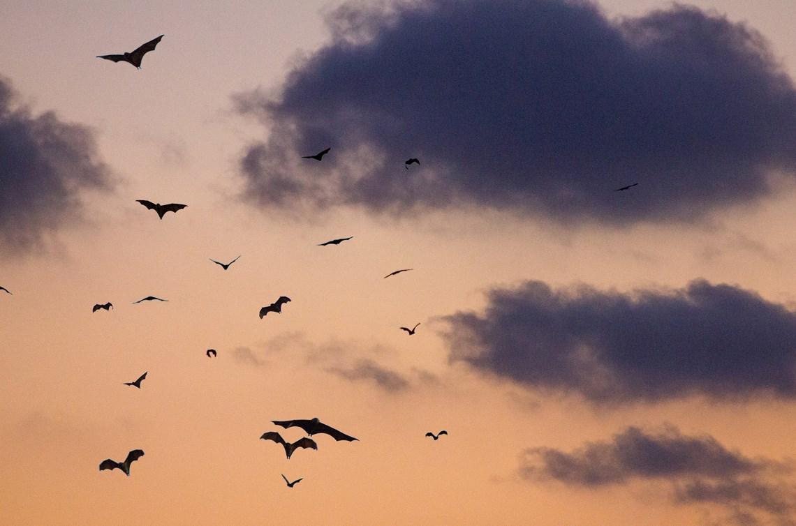 Rabies alert at White Pine Beach in Port Moody