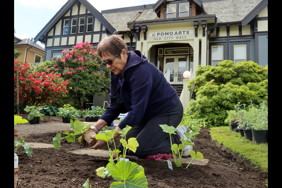 Pat Lapthorne gets her hands dirty in the new victory garden being planted by volunteers in front of the Port Moody Arts Centre on Friday.