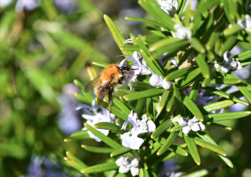 Pollinators Getty photo