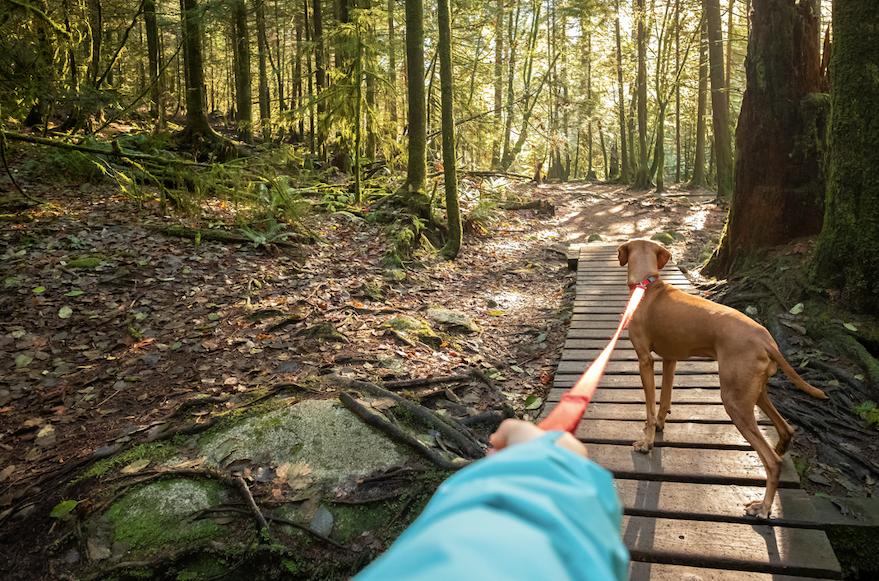 Waslking a dog on a trail