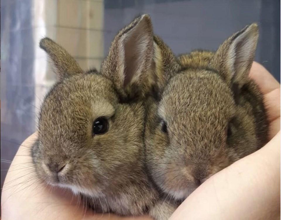 baby bunnies rescue socity rabbit virus