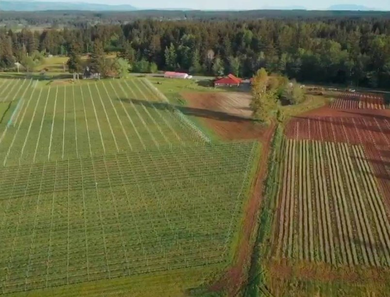 beaufort-vineyard-and-estate-winery