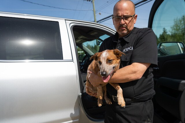 cid-male-staff-rescuing-dog-from-hot-car_p3470583