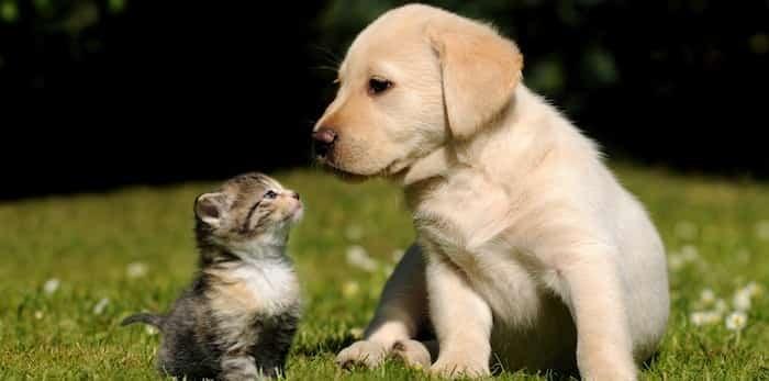04164710_puppy-kitty-kiss