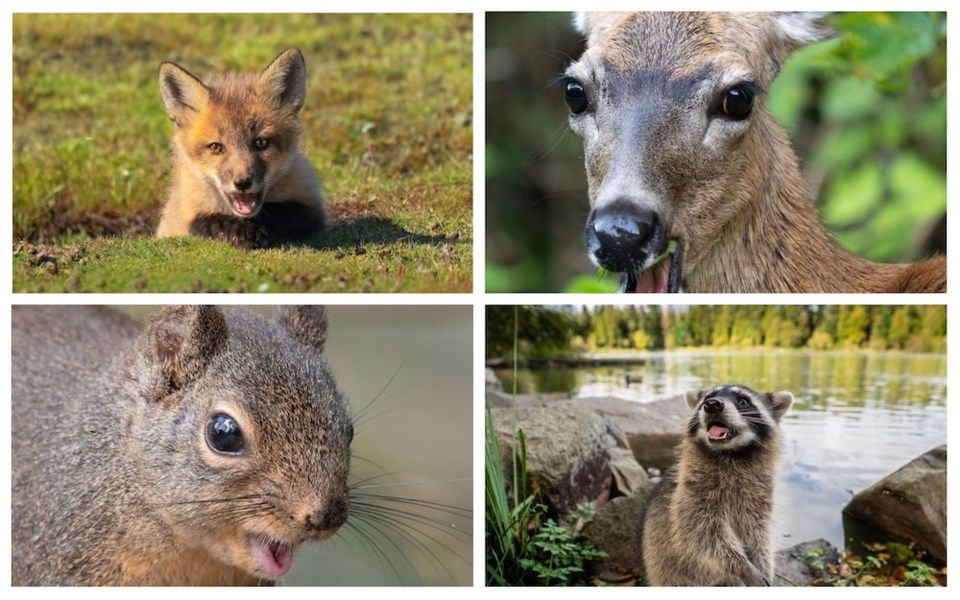 animals-faces-vancouver-spring