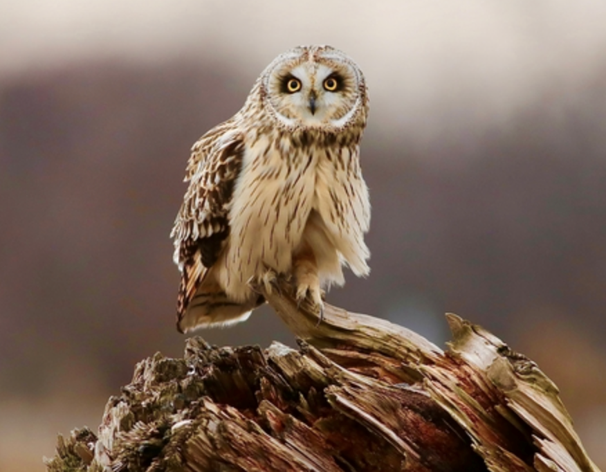 bc spca wildlife photography contest 2020 owl burnaby Screen Shot 2020-09-17 at 9.57.51 PM