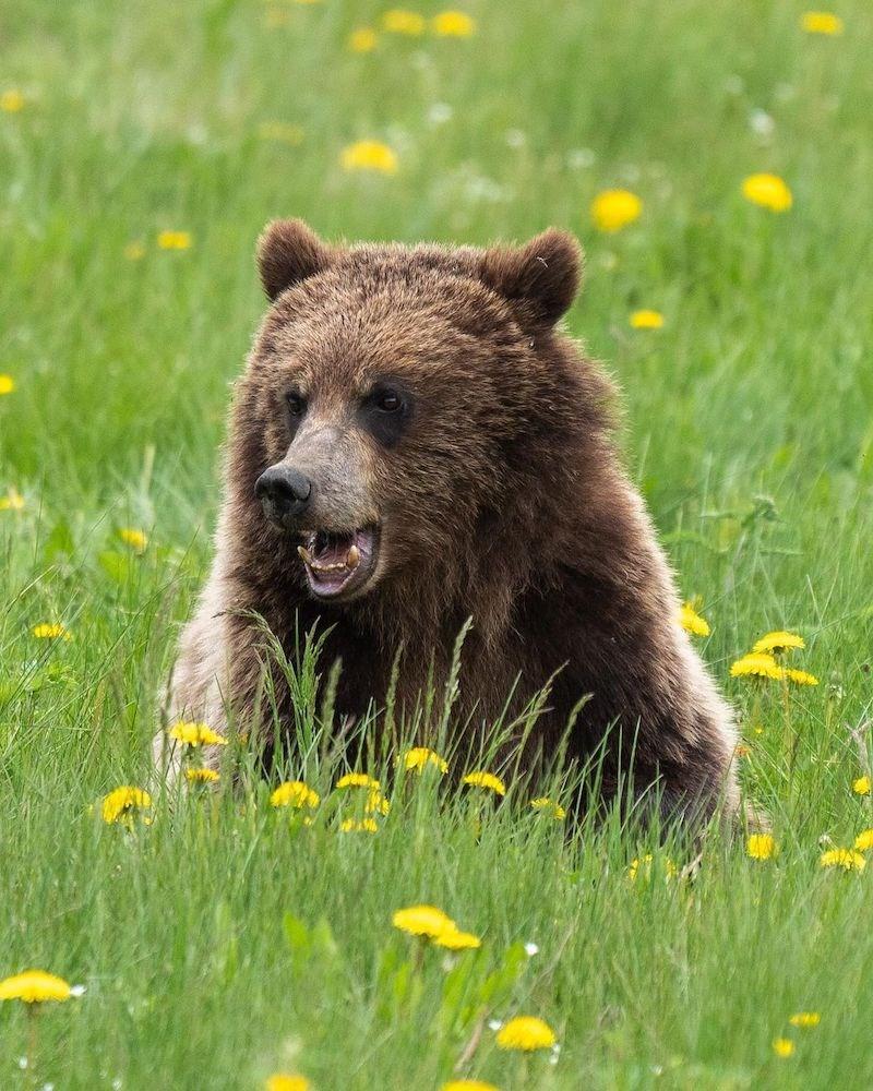 bear-vancouver