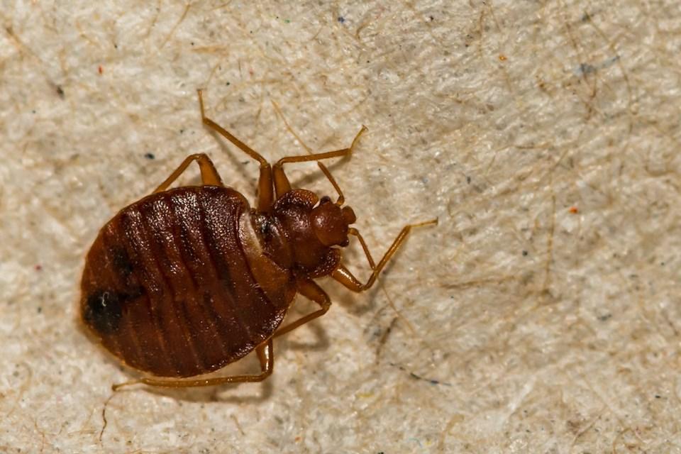 bed-bug-vancouver-orkin