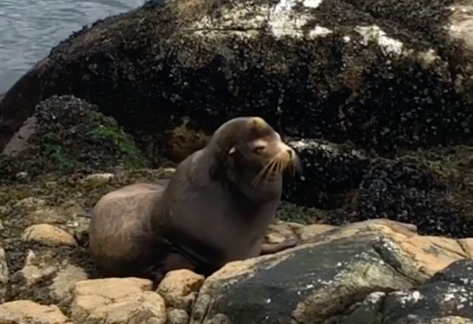 california-dreaming-sea-lion-in-vancouver.jpg