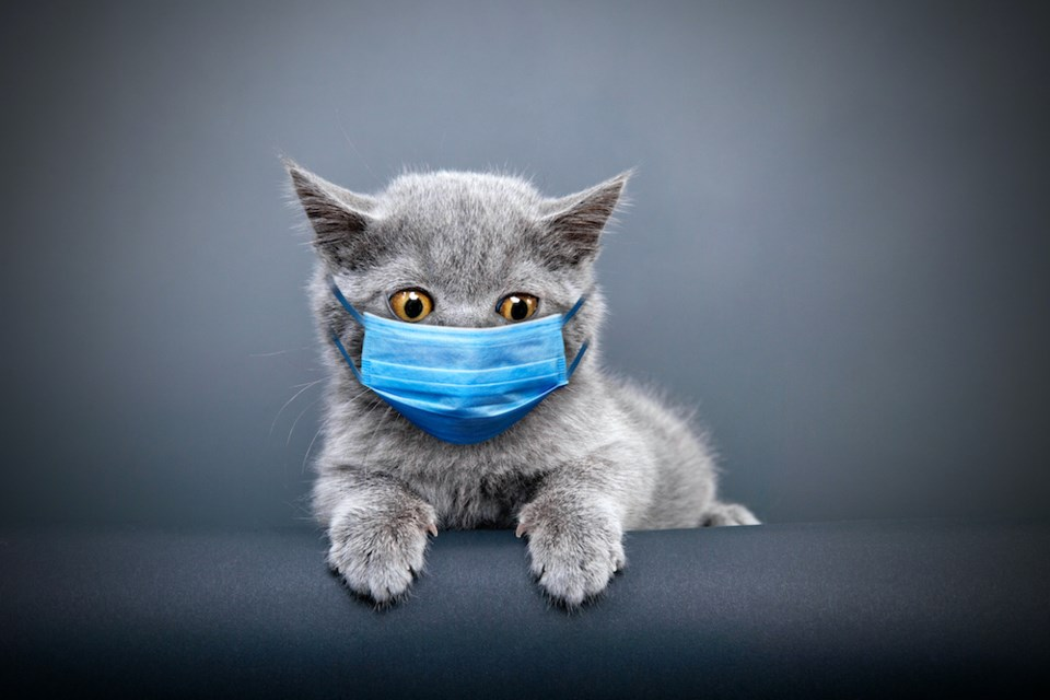 cat-wearing-face-mask