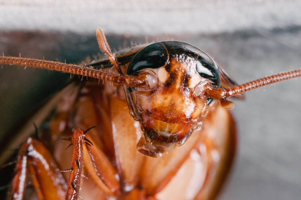cockroach-vancouver-residential-tenancy-branch
