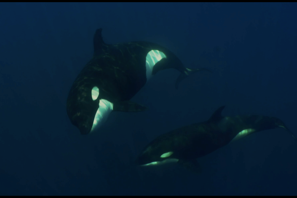 Vanessa Prigollini, the filmmaker behind 'Contrasts' hopes to foster a sense of empathy towards whales and dolphins in captivity.