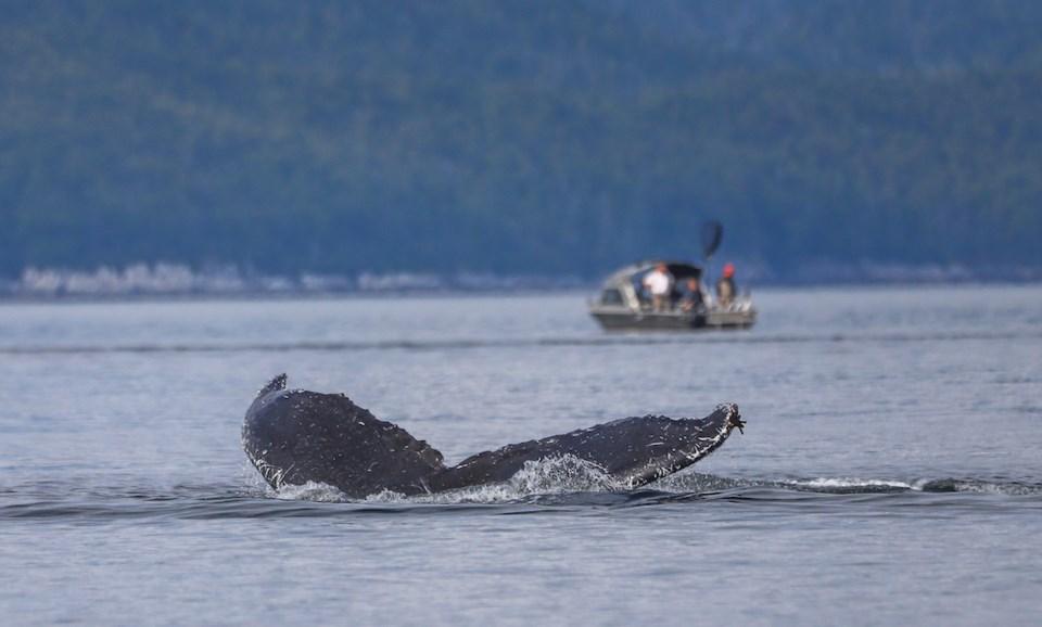Credit Ocean Wise - whale report app