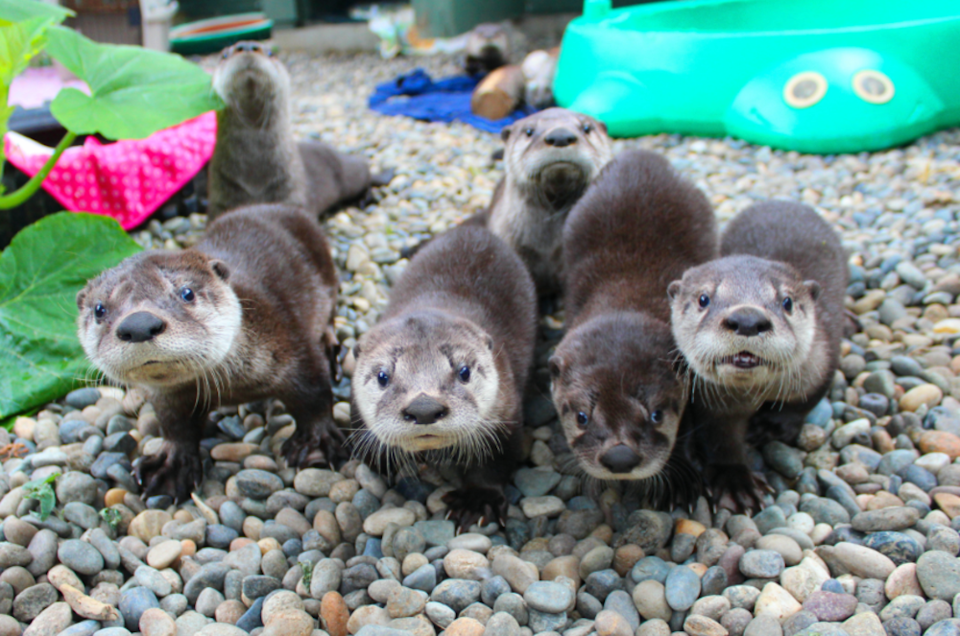 cute-otters-critter-care-wildlife.jpg
