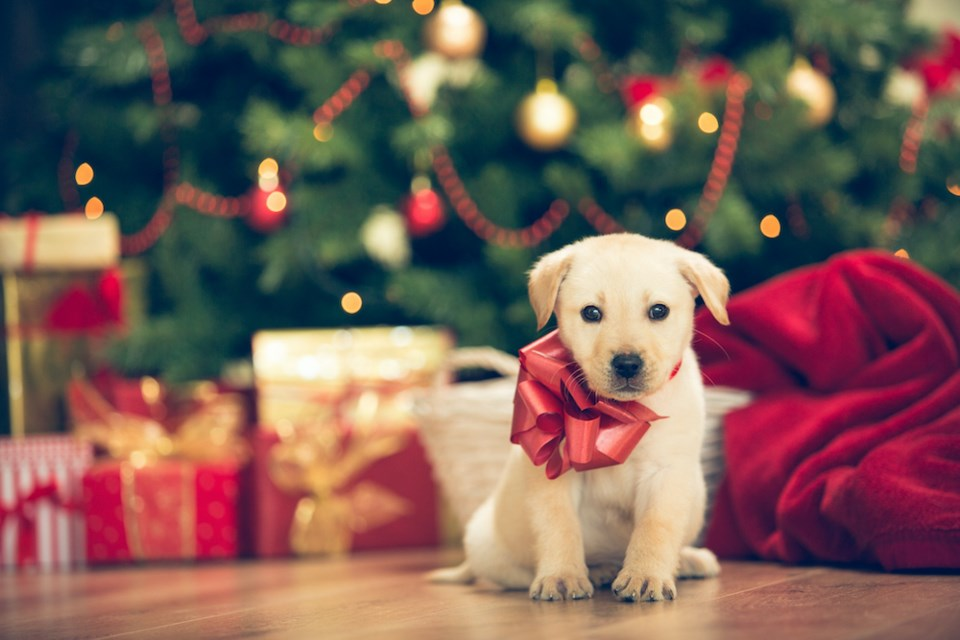 cute-puppy-red-bow