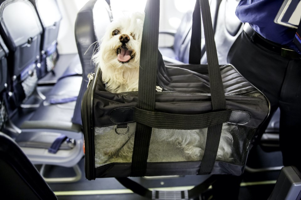dog-travelling-plane-emotional-support-air-canada-vancouver-mental-health
