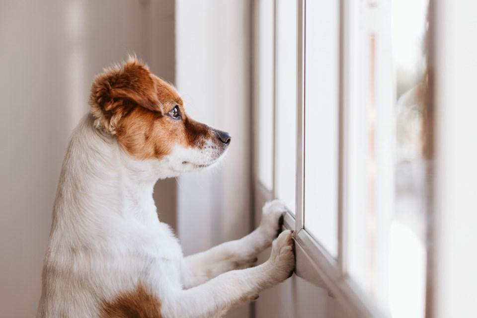 Dogwaiting-EvaBlanco-GettyImages-1213207280