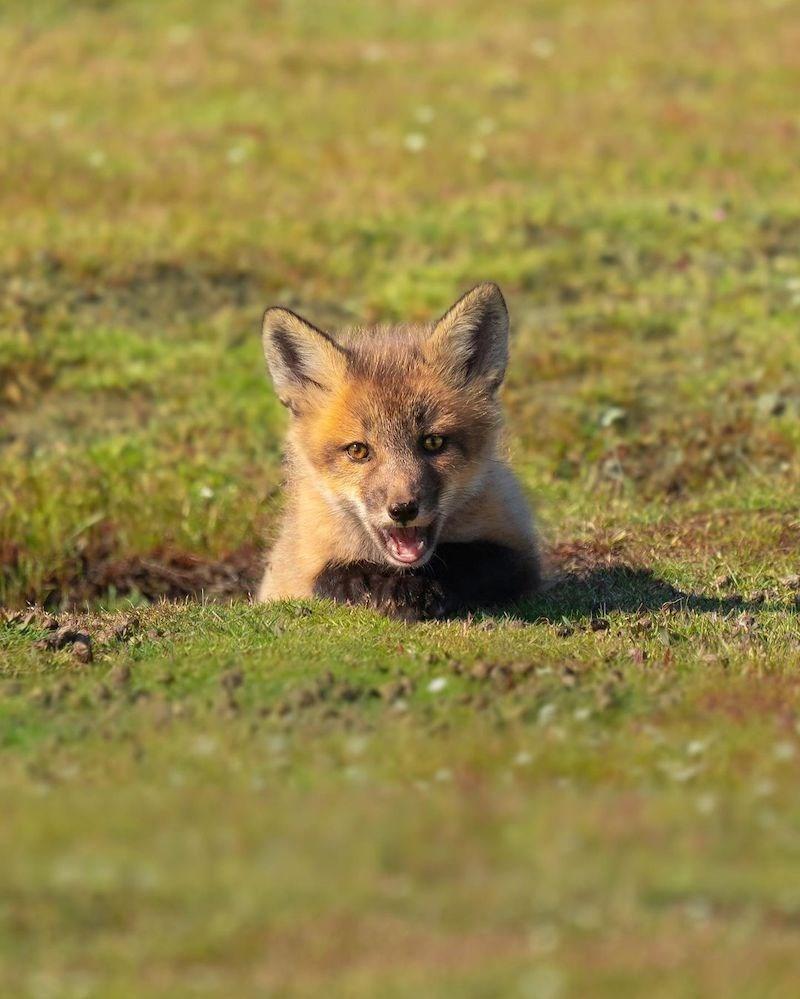 fox-vancouver