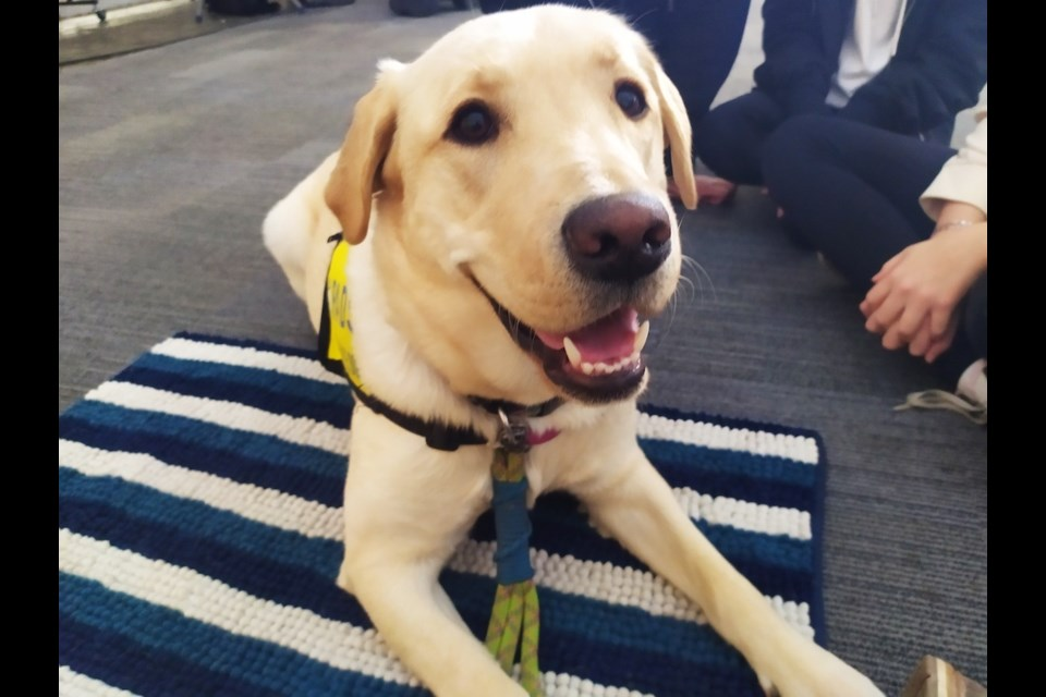 Gaia, the Canuck Place Children's Hospice's new therapy dog, will offer emotional support and comfort to Vancouver families in difficult times.