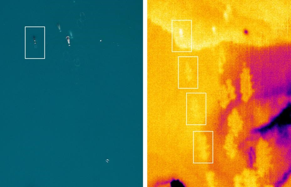 Narwhal-DSLR-and-Infrared