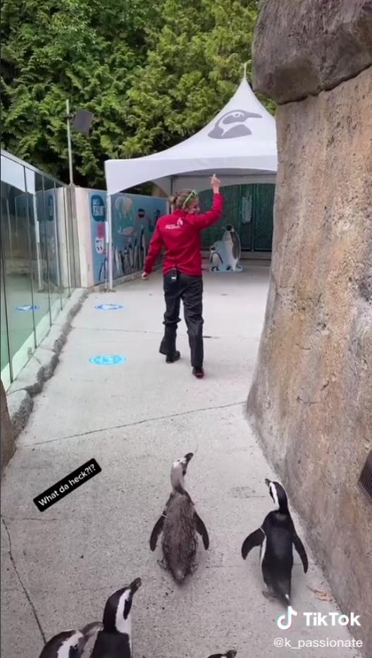 Penguin march1