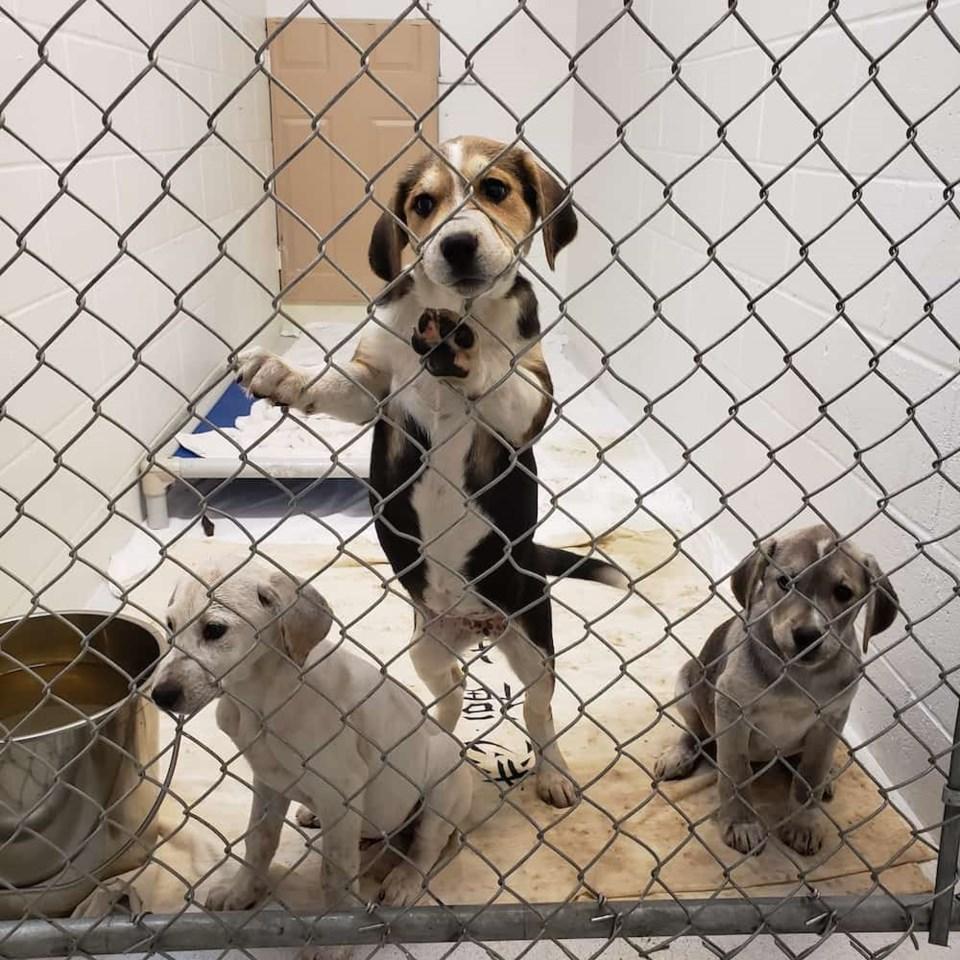 Princeton dogs4