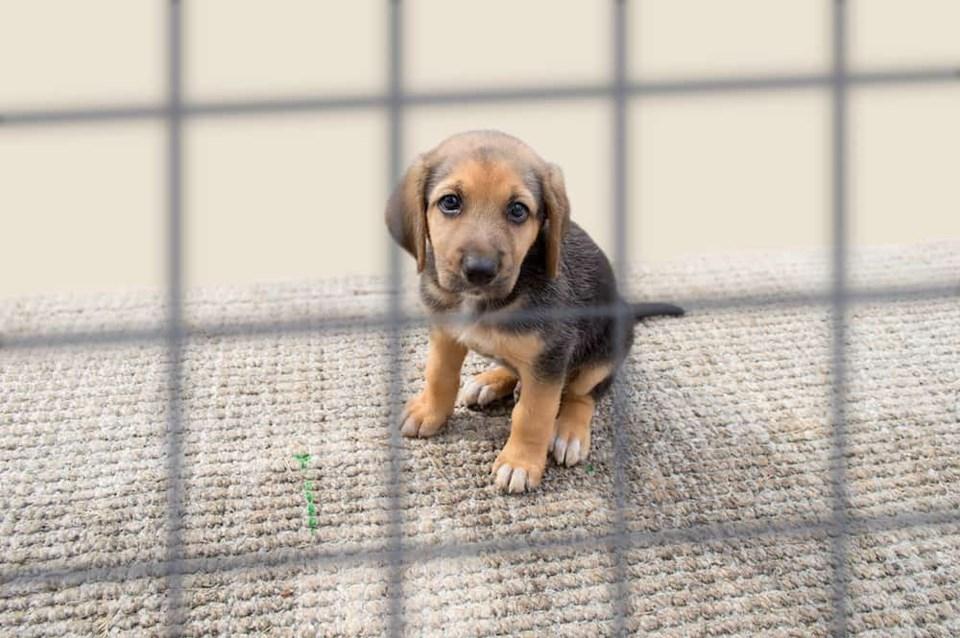 sad-puppy-behind-bars