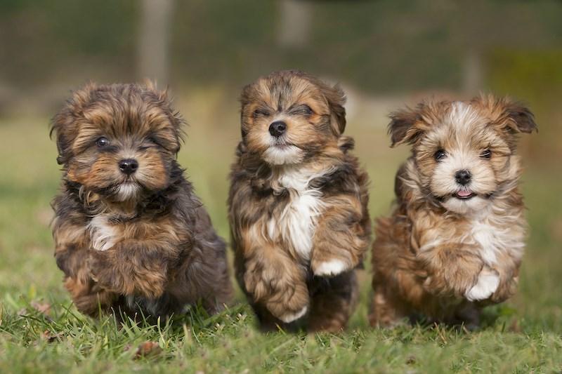 top-dog-names-canada-vancouver-2021