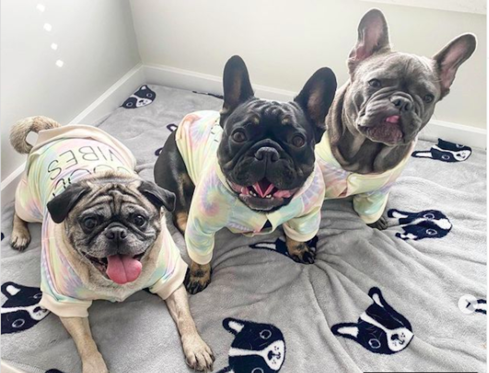 two-frenchies-and-a-pug-vancouver-dog-love.jpg