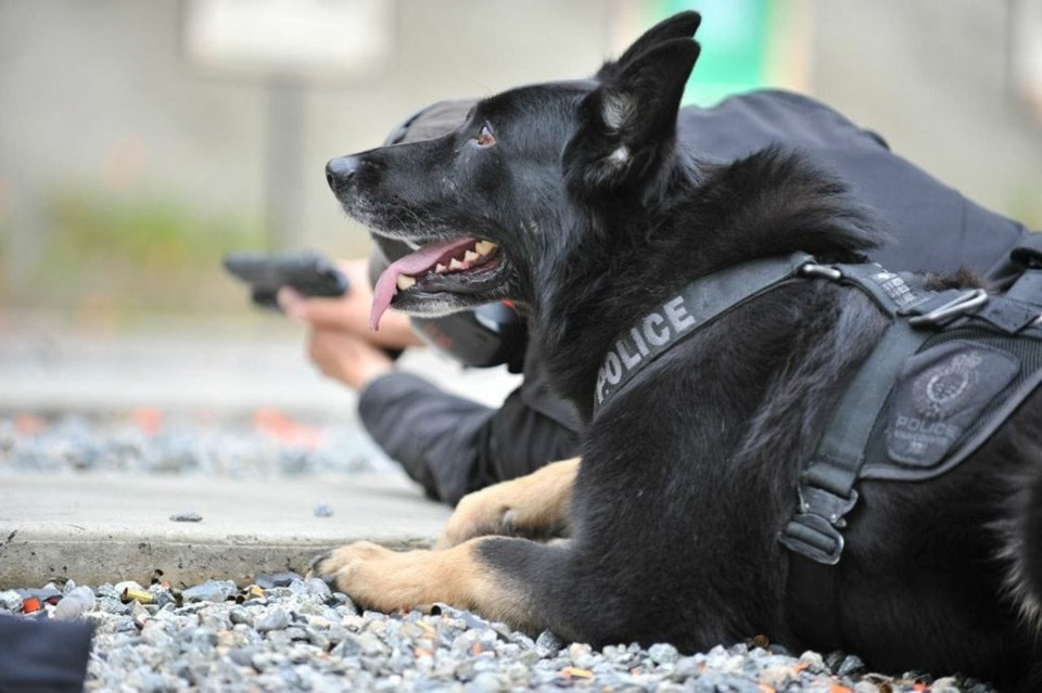 Vancouver police - retired police dog - canine unit. - knight
