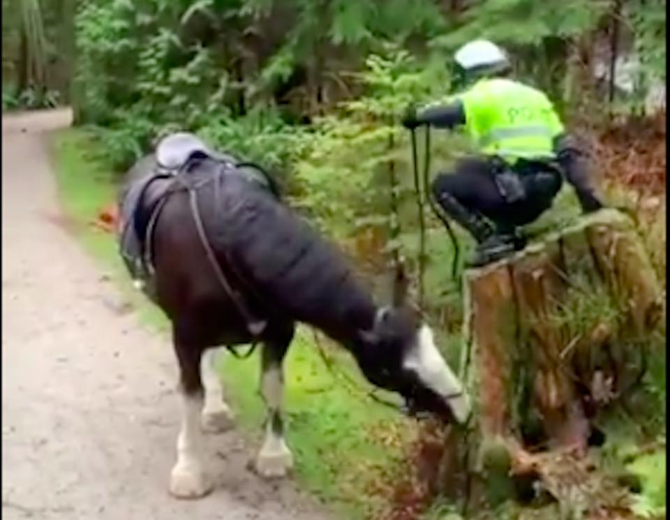 vancouver-police-mounted-unit-struggle-horse.jpg