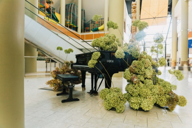 Flowery piano performances offered in North Vancouver this weekend (PHOTOS)