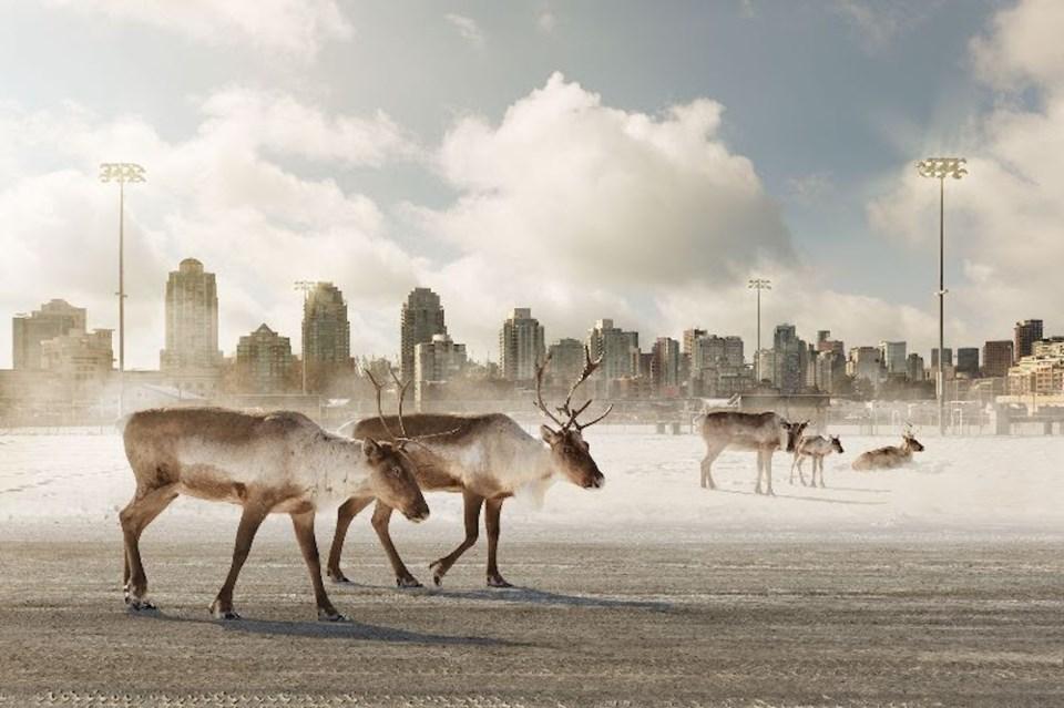 cariboo-walking-city