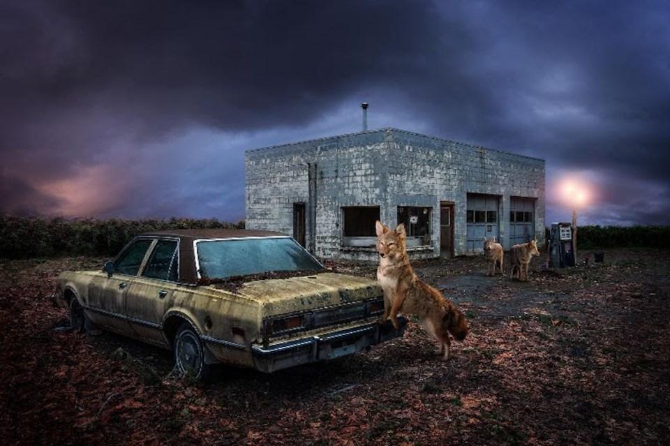 wolf-on-car