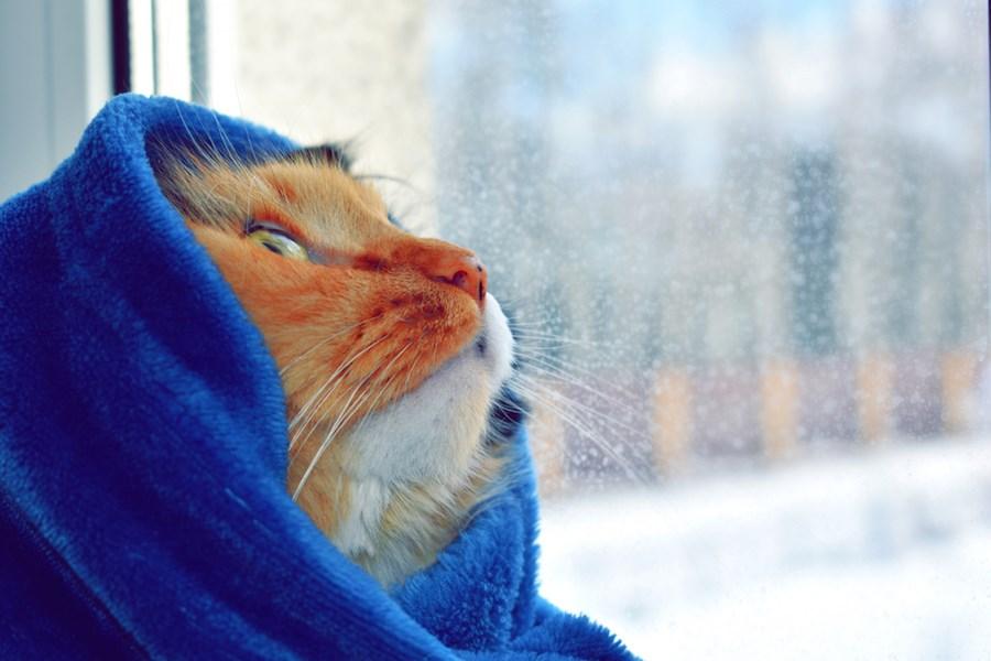 cat-blanket-cold-window