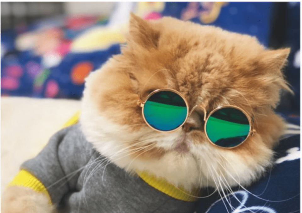 cat-sunglasses.jpg