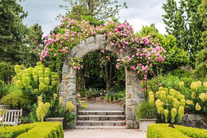 VanDusen Botanical Garden has two rose gardens to explore