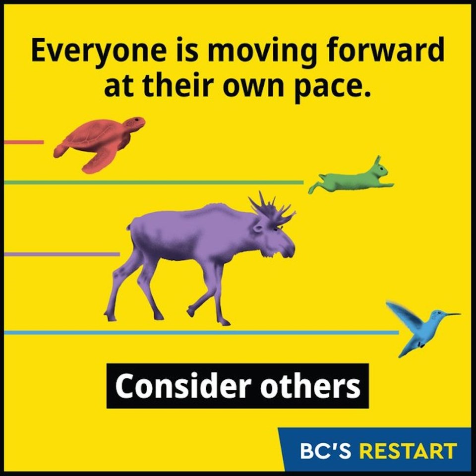 bc-animal-pace-graphic-covid-19
