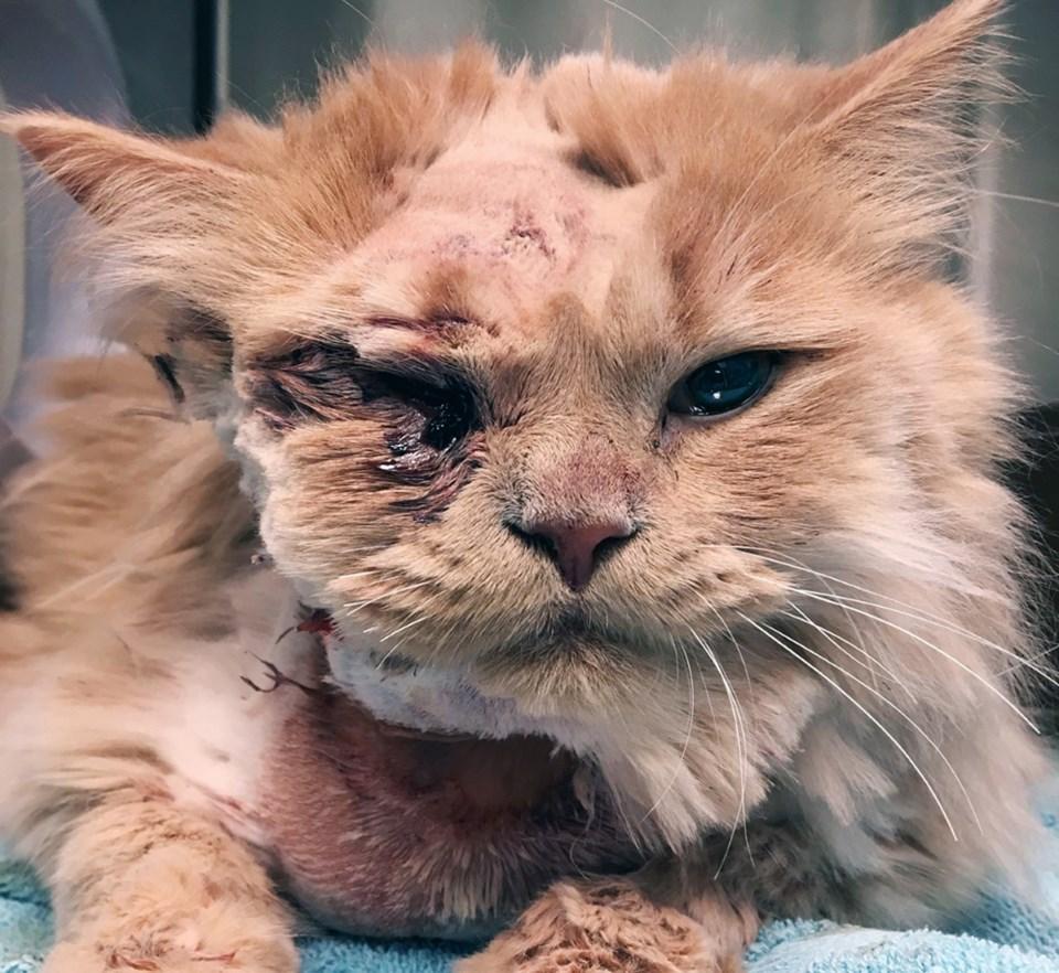 Cupid - cat fights bobcat 1