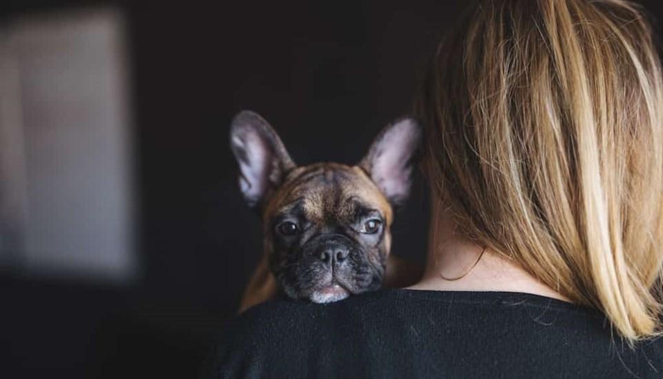 cute-pupper-watching
